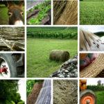 Stress des agriculteurs : une association leur vient en aide