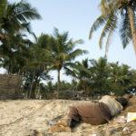 Le suicide des paysans indiens…