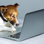 Un nouvel anti-stress en entreprise : le chien!