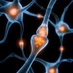 Le stress chronique entrainerait une diminution du nombre de synapses…