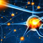 Une récente étude illustre de nouveaux liens entre le stress et la motivation…