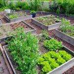 La verdure et le jardinage, remèdes au stress…