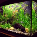 Les aquariums diminuent le niveau de stress