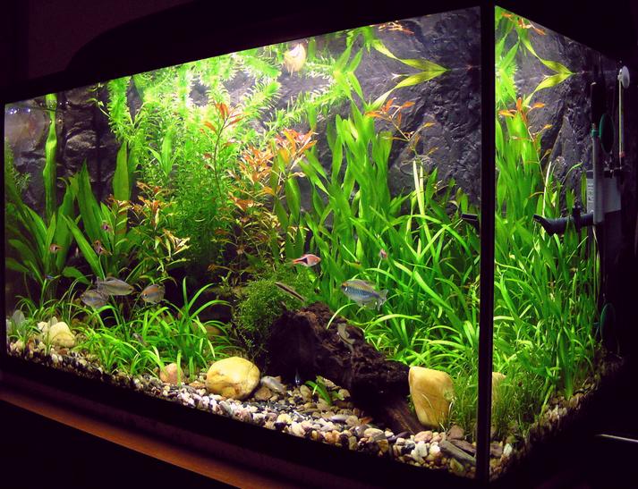 Les aquariums amélioreraient l'humeur
