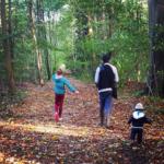 Les balades en forêt contre le stress