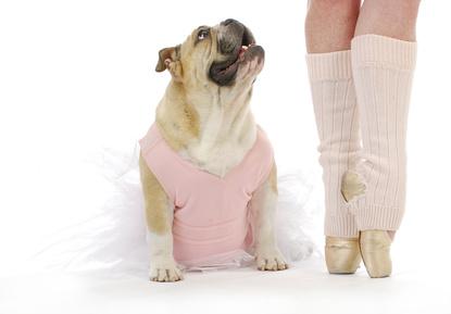 Des chiens pour lutter contre le stress des danseurs