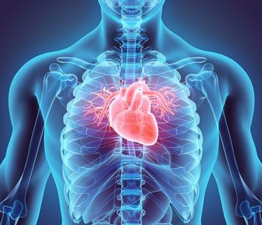 sensibilité au stress Stress et risques cardiovasculaires