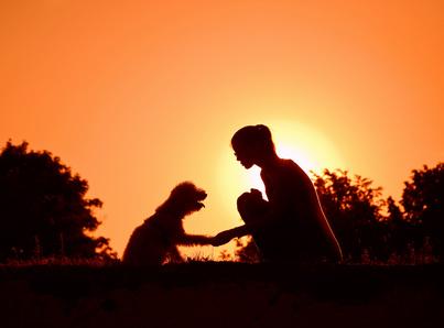 Cohérence cardiaque entre chiens et maîtres