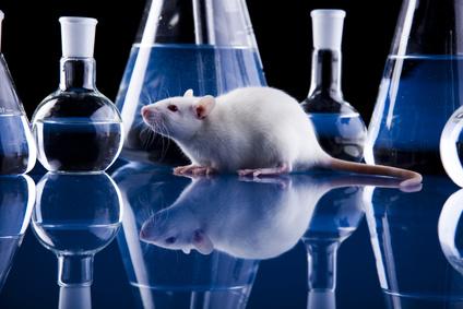 Des effets du stress Lien entre stress et cancer établi chez la souris
