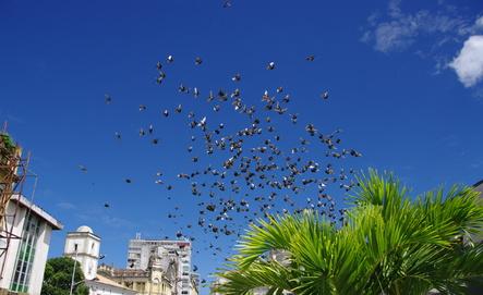 Pollution et stress chez l'oiseau