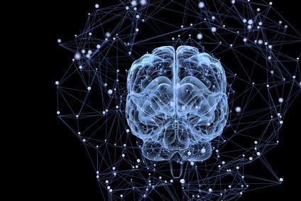 Découverte majeure : stress et rôle du cortex cérébral