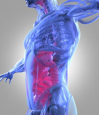 Diminuer le stress via notre microbiote : une piste sérieuse