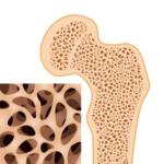 Ostéocalcine : nouvelle molécule de la réaction de stress